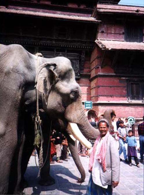 ELEPHANT VISITS KATHMANDU DURBAR SQUA