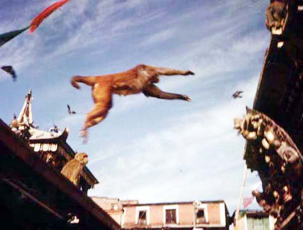 FLYING MONKEY at SWAYANBRUHNATH STUPA